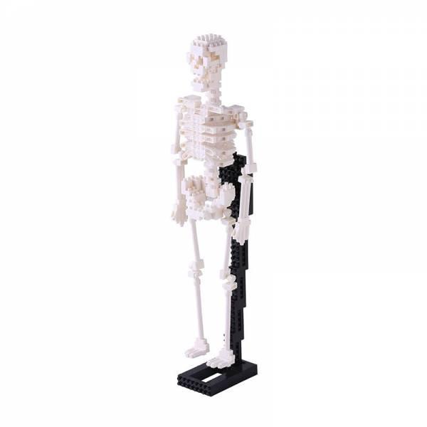 Middle NANOBLOCK Human Skeleton